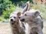 chiens - mouvements